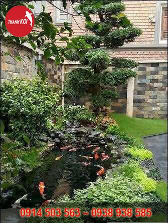 Hồ cá Koi ngoài trời, hồ cá koi sân vườn, ho ca koi san vuon