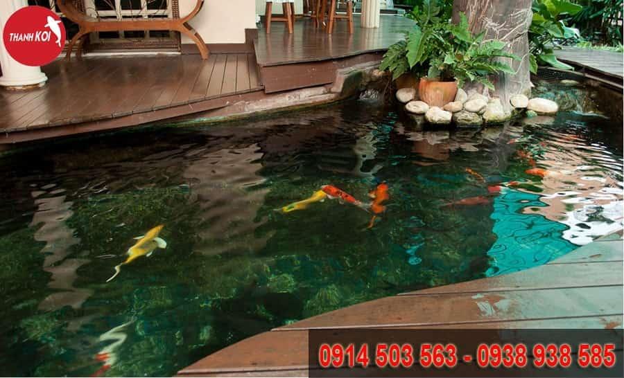 hồ cá koi Vũng Tàu, ho ca koi vung tau