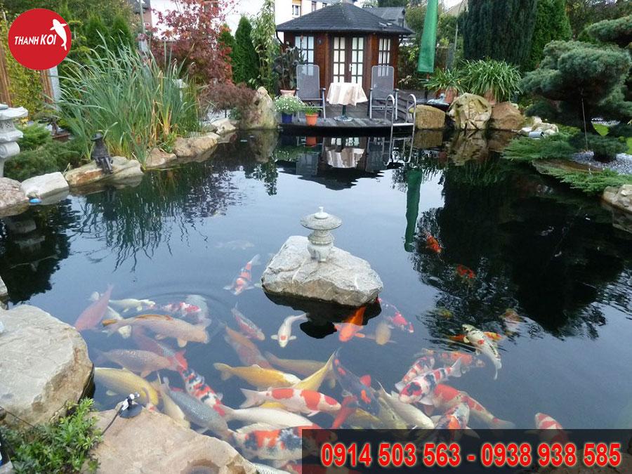 hồ cá koi Tphcm, ho ca koi Tphcm