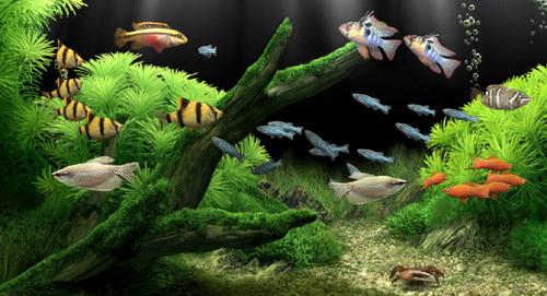 Chọn mua cá cảnh đẹp cho hồ thủy sinh