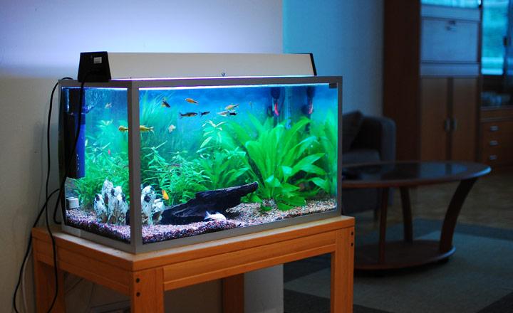 Hồ cá trong nhà hút tài lộc cho gia chủ