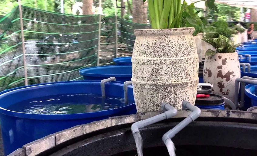 Hệ thống lọc hồ cá Koi
