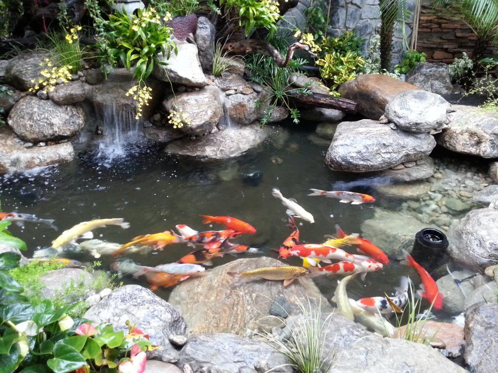 Hồ Cá Koi Nhật Bản Quận 12