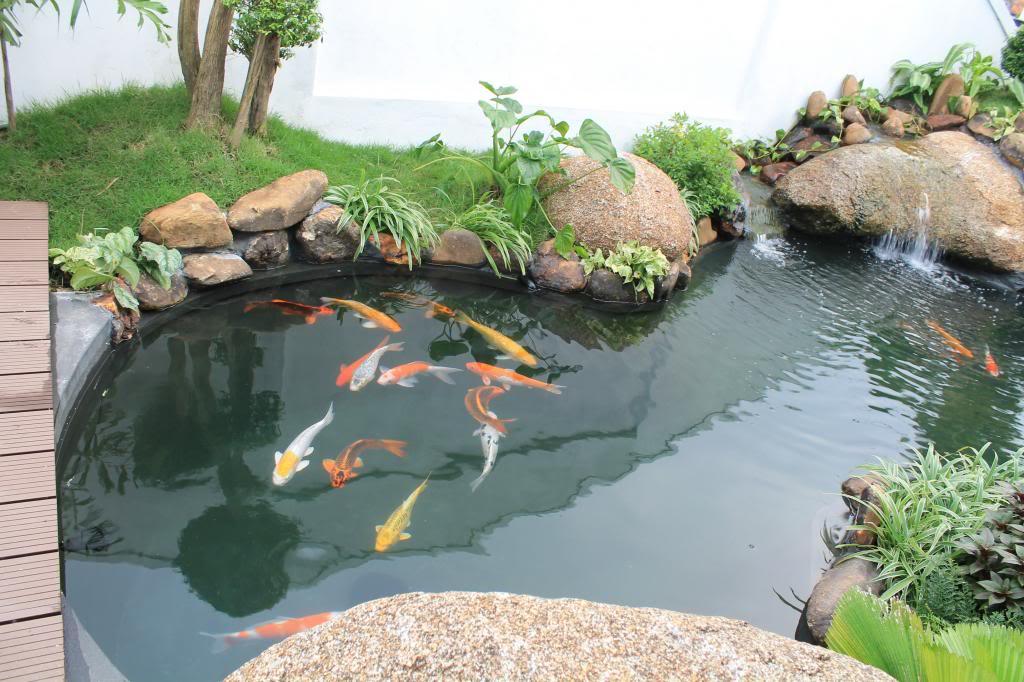Hồ Cá Koi Nhật Bản Huyện Cần Giờ