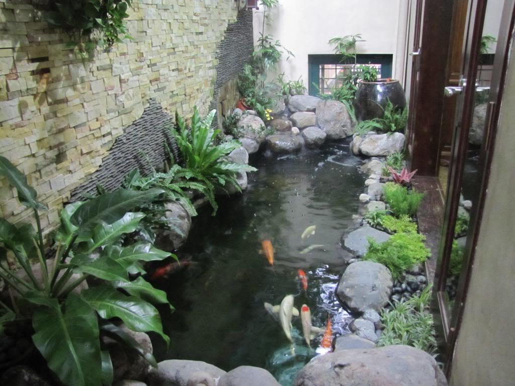 Hồ Cá Koi Nhật Bản Huyện Bình Chánh