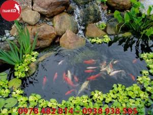 Những lưu ýlúckiểu dángthi công hồ cá Koi