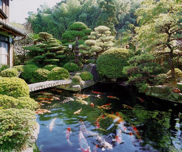 Hồ Cá Koi Nhật Bản Quận Bình Thạnh