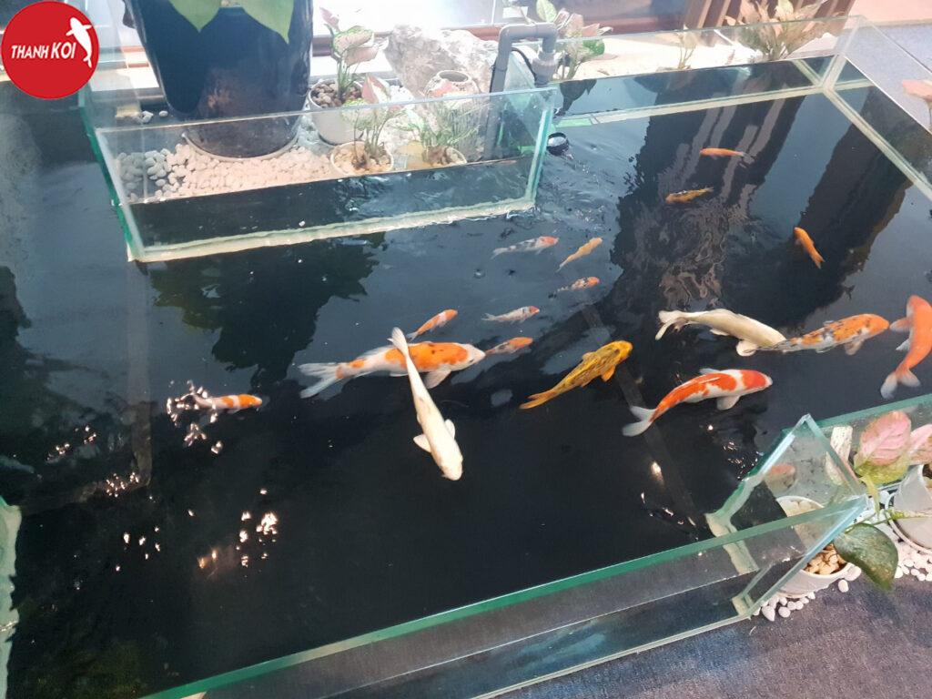 Những mẫu hồ cá koi đẹp nhất, được ưa chuộng nhất thời gian qua