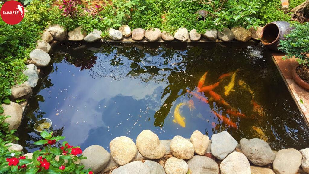 Hướng dẫn cách thiết kế hồ cá koi mini ngoài trời đẹp thẩm mỹ