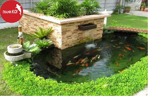 Hướng dẫn cách thiết kế hồ cá koi đơn giản tại nhà